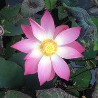 200_blomst_4